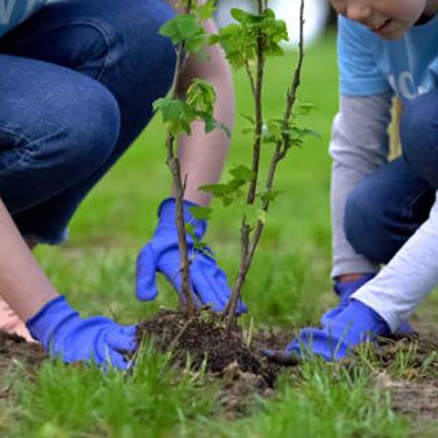 韓国文化:国民的に植樹する日「植木日(식목일)」